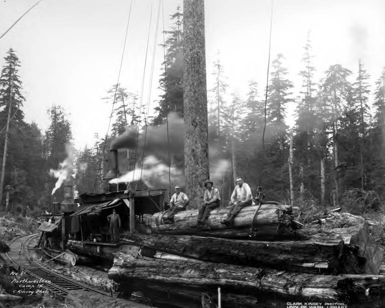 logs loaded on flatcars