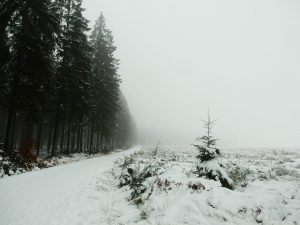 winter snow in forest