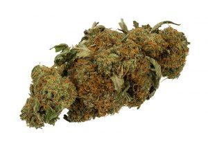 a cannabis weed bud