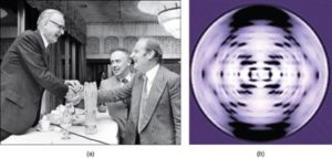 Watson and Crick with Photo 51