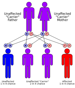hereditary mutation