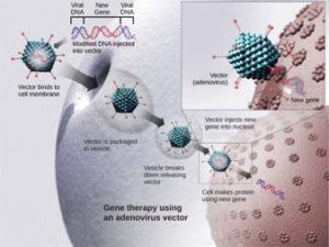 Virus gene therapy