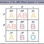 10n.bloodtypes
