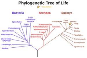 1-11-phylogeny