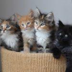 1-4-kittens