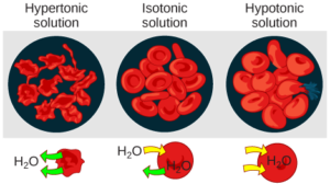figure_03_21 osmosis in red blood cells
