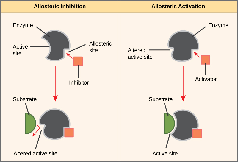 inhibition diagram