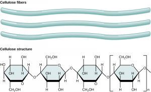 cellulose fibers, illustrated as long light blue strands and with a chemical diagram.