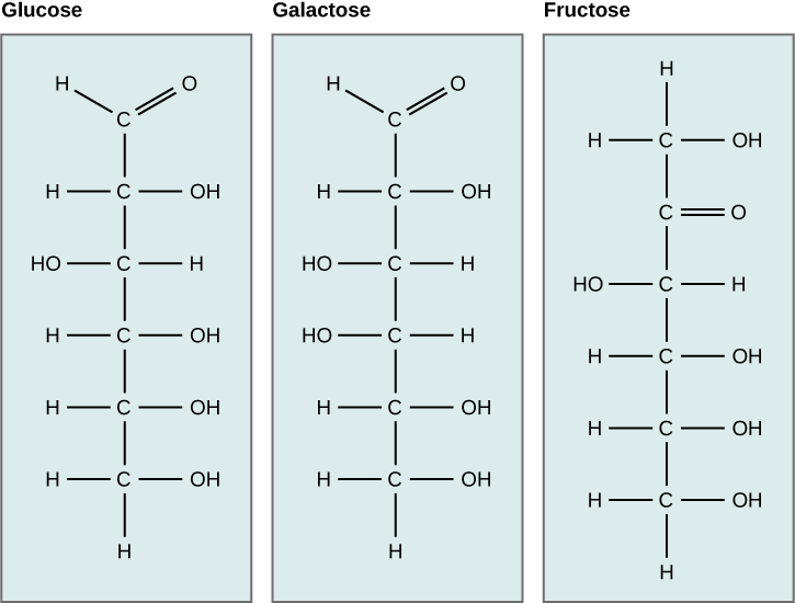 chemical structures of glucose, galactise, and fructose. All three sugars contain 6 carbon atoms.