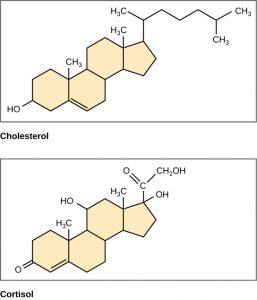Chemical structures of cholesterol and cortisol