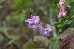 10a.flower