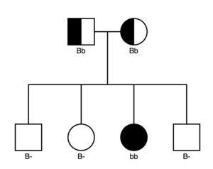 11d.pedigree2b
