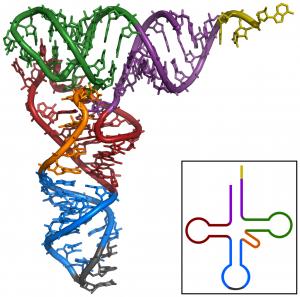 a colorful tRNA