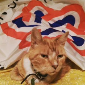 Robin the orange cat under a US bicentennial flag