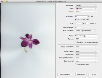 Image showing preview of a flower selected for scanning.