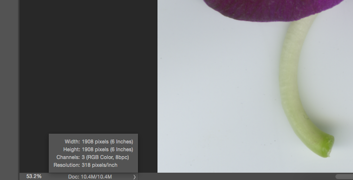 The Photoshop® status bar showing current print size for image after resolution adjustment.