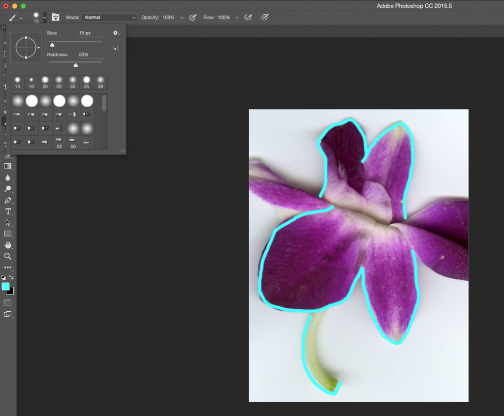 Screen capture showing brush tool settings and cyan lines painted over a scanned flower.