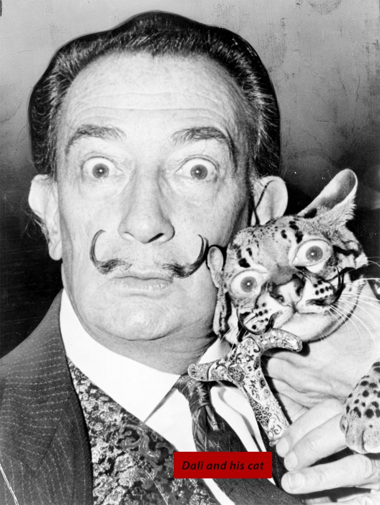 Full image of final result: Dali and His Cat (with his eyes and mustache on the cat).