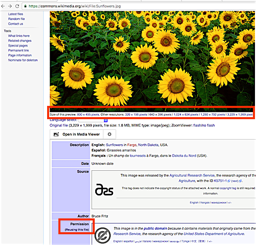 "Image of Search return for ""Sunflowers"" on Wikimedia Commons"