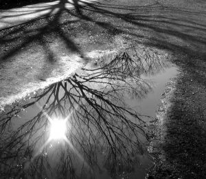black and white photograph (by Yuma Hori) of a tree reflected in a street puddle