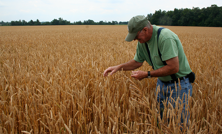 A photograph of a man in a wheat field.