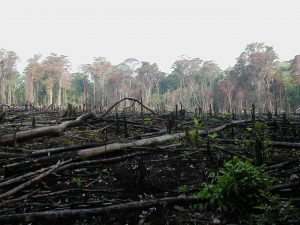 A photo of a section of forest in Sourther Mexico that has been cleared for agriculture.