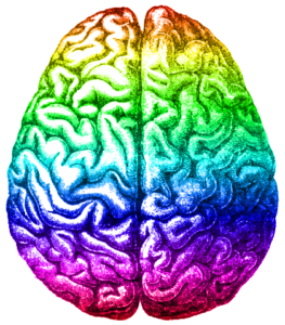 Colorful drawing of human brain