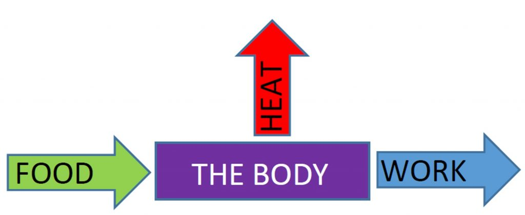 "A rectangle labeled ""the body"" with arrow labeled ""food"" pointing inward from the left and an arrow labeled ""work"" pointing outward to the right. An arrow labeled ""heat"" points outward and upward from the top."