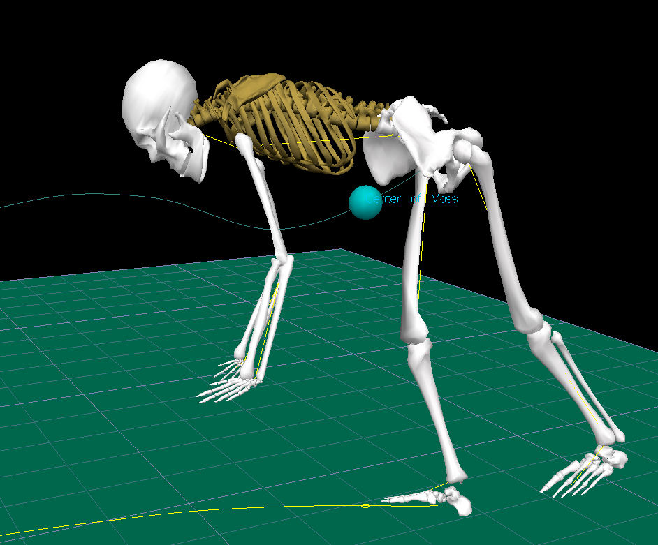 Computer generated graphic of a human skeleton captured from a computer simulation of a person moving. The person is bending at the waist with arms hanging down toward the floor. The center of mass is indicated by a dot slightly outside and in front of the body at waist level.