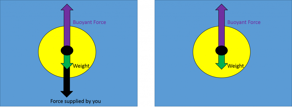 "The diagram on the left shows a long arrow labeled ""buoyant force"" pointing upward from the center of the ball. An arrow labeled ""weight"" points downward along with a second downward arrow labeled ""force supplied by you."" The combined lengths of the downward arrows equals the length of the upward arrow. The arrow representing ""force supplied by you"" has been removed from the diagram on the right, the length of the upward buoyant force arrow is much longer than the length of the downward weight arrow."