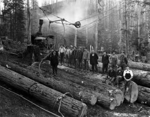 men logging in the forest