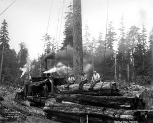 logs loaded on flatcars