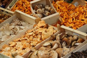 many kinds of mushrooms