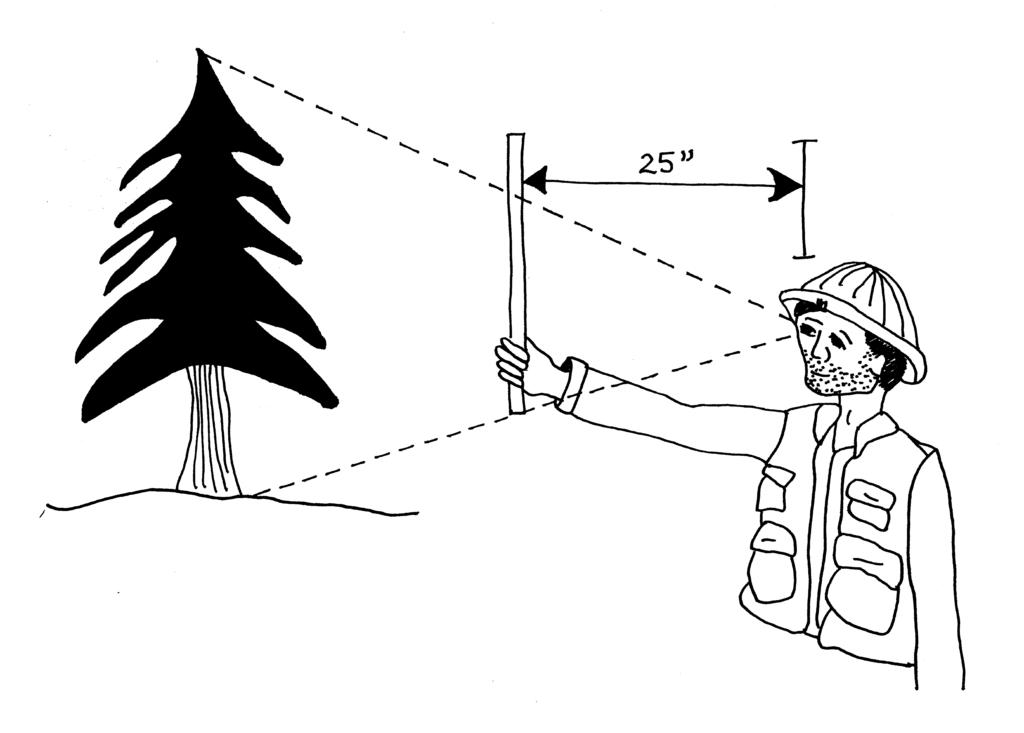 man holding a biltmore stick