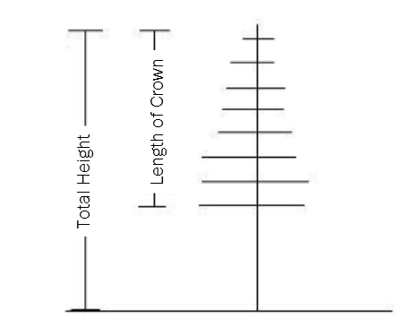 graphic showing a length of a tree's crown