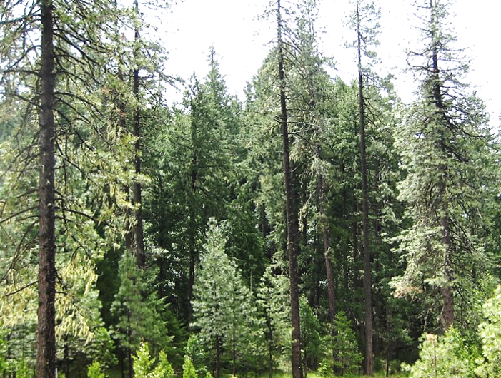 photo of forest with multiple layers of trees