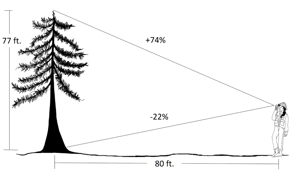 technician measuring tree height from a horizontal distance of 80 ft.