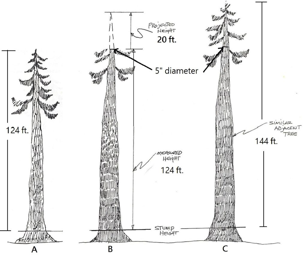 graphic showing how a broken top tree is reconstructed by comparing a neighboring tree to estimate its missing top