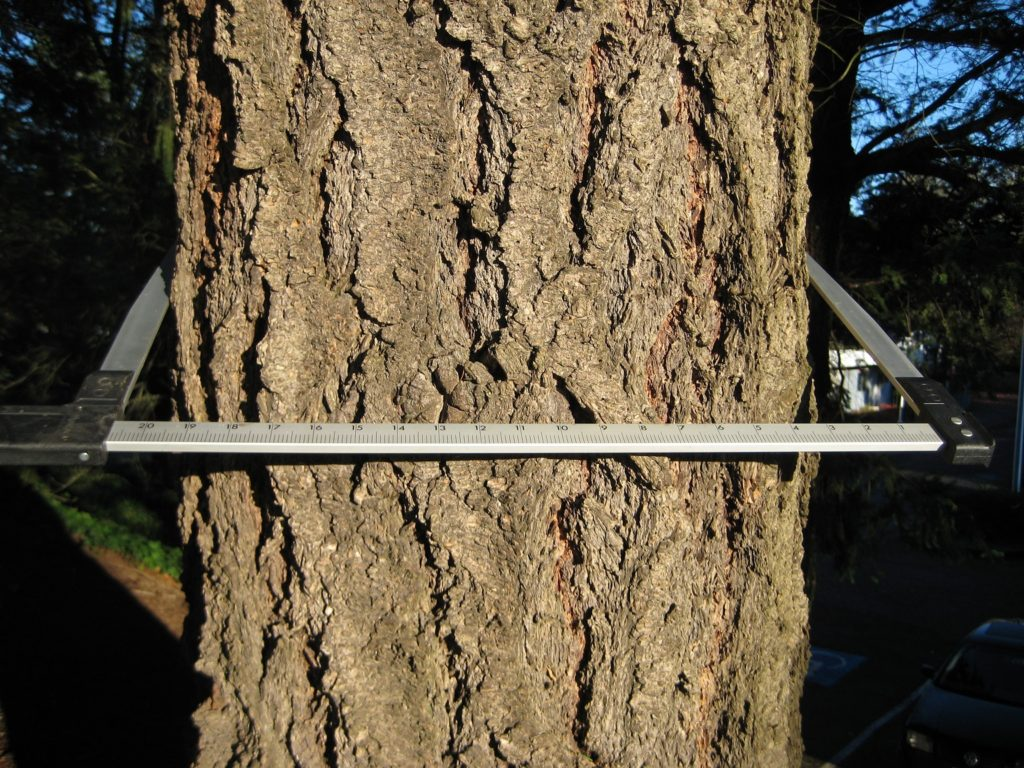 photo of tree trunk clamped by a tree caliper