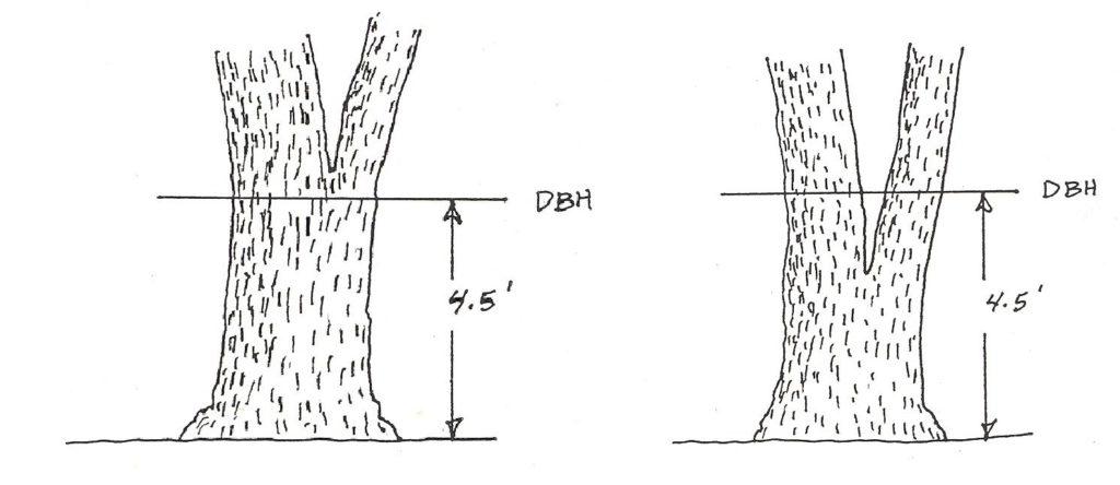3 2 determining tree diameter  u2013 forest measurements  an applied approach