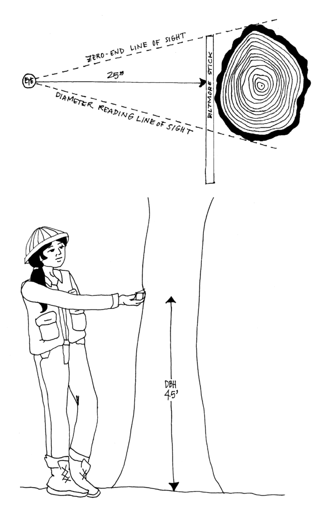 woman holding biltmore stick at 25' reach