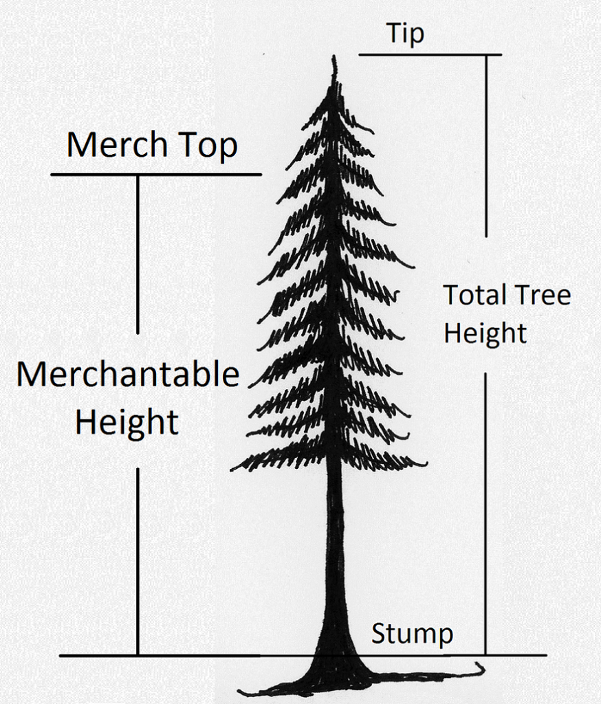 tree showing merch height from 1-ft. stump to merch top.