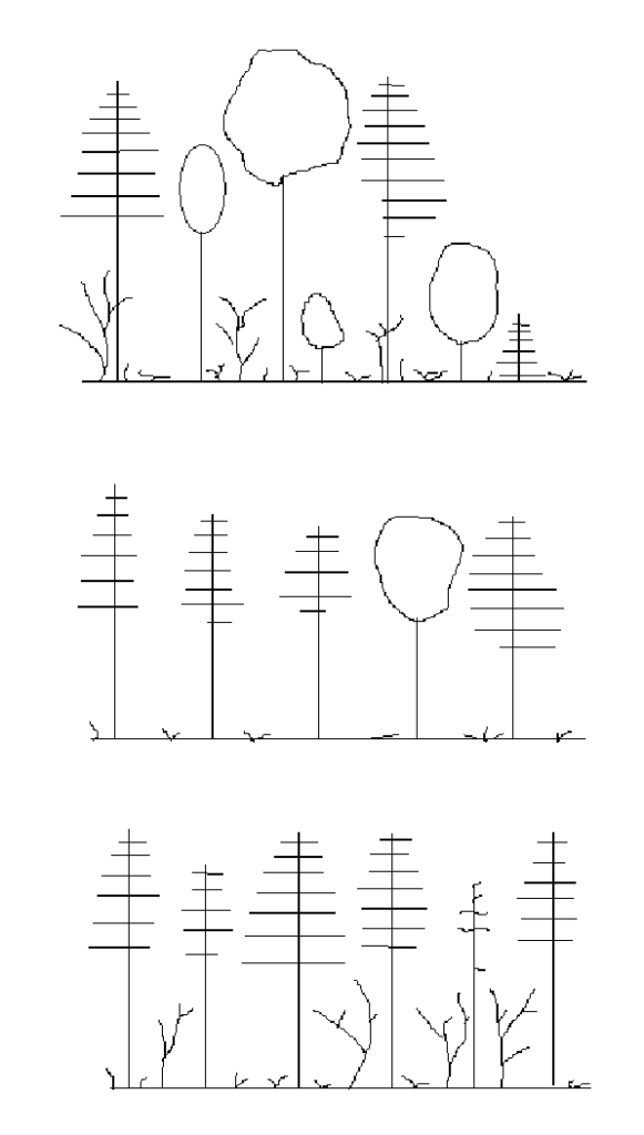 top illustration shows unevenaged stand; middle illustration shows equal crowns of evenaged stand; bottom illustration also shows evenaged stand - of single species
