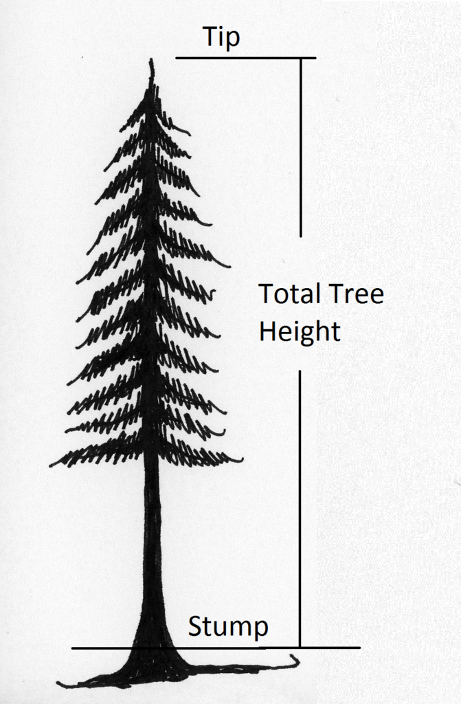 tree showing height from 1-ft. stump to top of tree