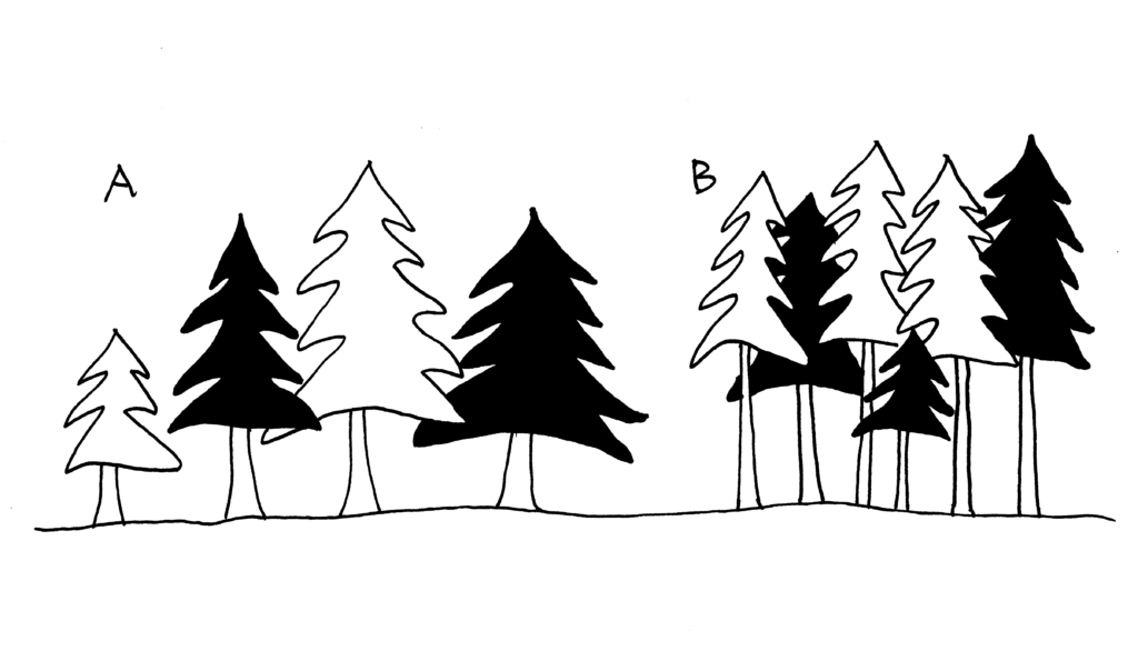graphic showing group A trees spaced widely with large crowns and large diameters, and group B trees spaced close together with narrow crowns and small diameters. All are approximately the same height.