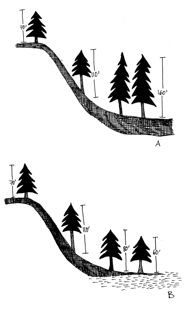 Illustration A shows trees growing on the ridge are shorter than those growing midslope. The trees at the base of the slope with the deepest soil are even taller. Illustration B shows the same thing except that the trees at the base have a high water table instead of deep soil, so are shorter than the midslope trees.