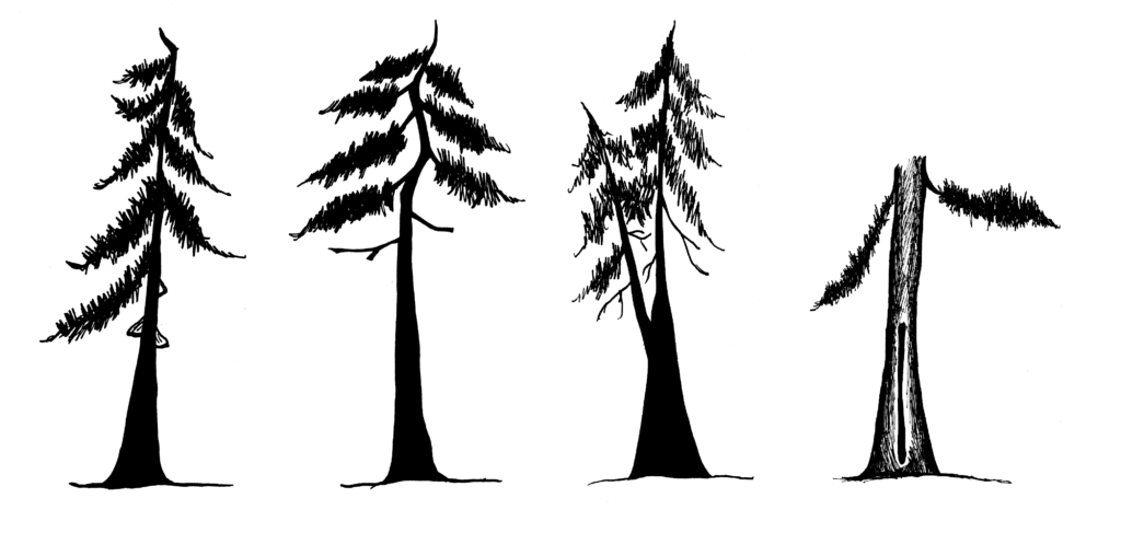 Trees showing defects as described in the caption.