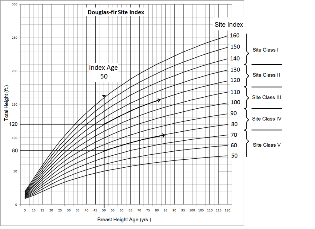 a chart showing twelve growth curves, illustrating that trees on good sites  continue to grow