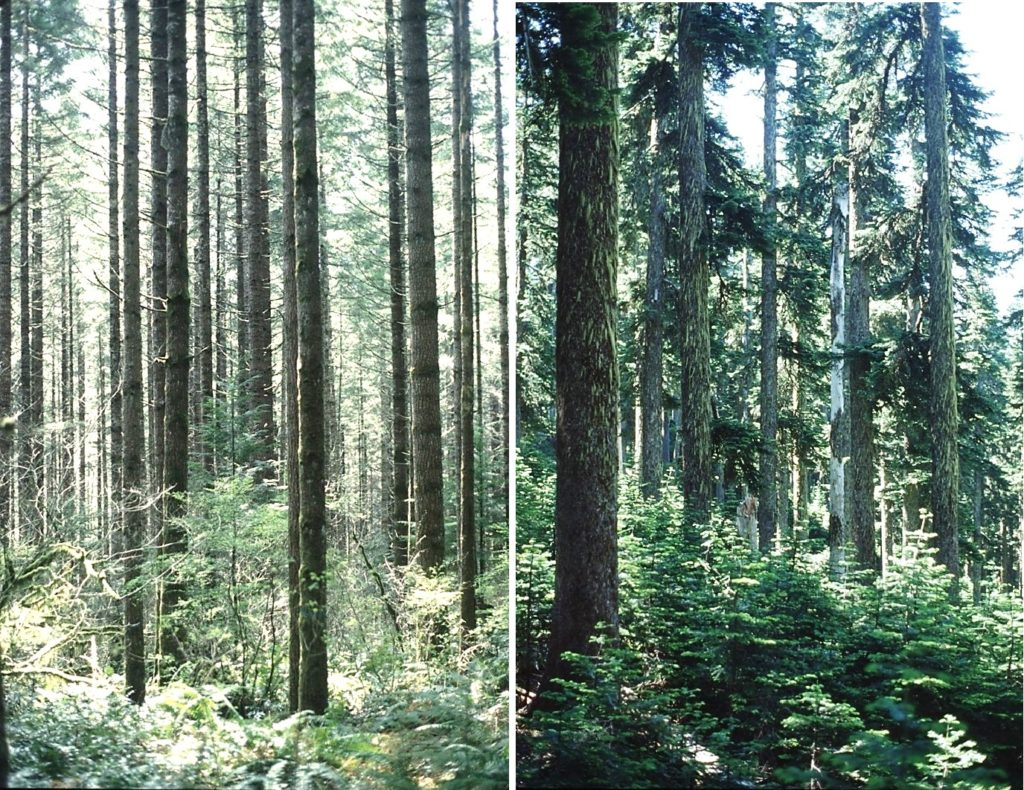 photographs showing forests as described in the figure caption.