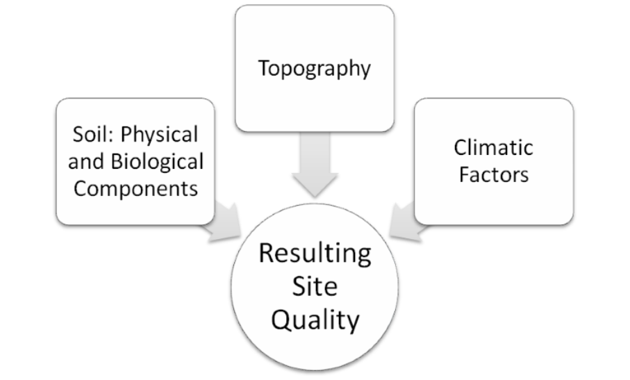 Flow chart showing soil physical and biological factors, topography and climate all influencing the resulting site quality